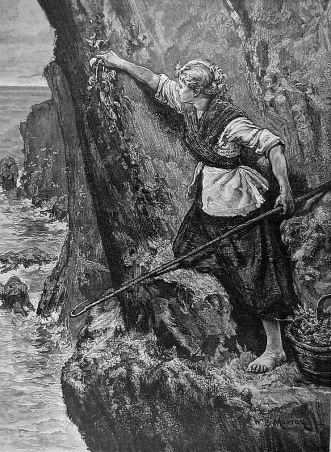 Cover of The Graphic depicting a samphire gatherer