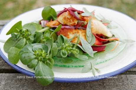 Salad of Sea Purslane and Organic Purslane